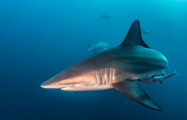 Rare double shark attack closes Florida beach; bites were just minutes apart
