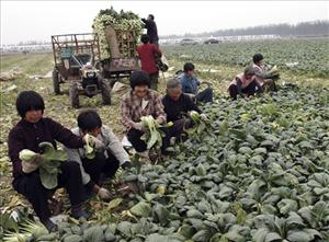 China's Communist Party met to discuss agricultural reforms as the global economic crisis buffets the country.