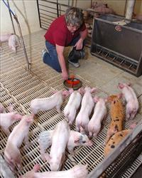 Worried about declining sales, pig farmers are urging officials to find a new name for swine flu.