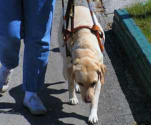 Psychiatric service dogs are trained to be empathetic to their master's needs.