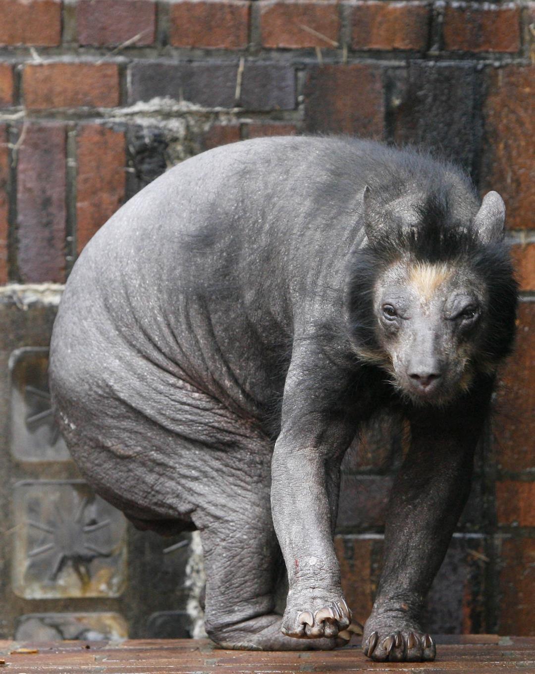 Этого член медведя фото через