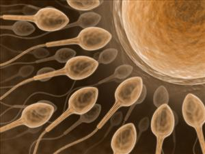 In a person with a semen allergy, you can have infertility because the body is attacking the sperm, making them inactive, so they are unable to fertilize the egg, an expert told ABC.