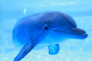 A bottlenose dolphin, a species that has proven especially intelligent in recent studies.