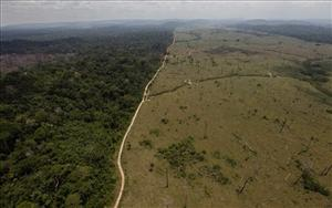 A deforested area is seen near Novo Progresso in Brazil's northern state of Paral.