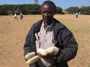 A Zambian farmers holds some of his maize from failed crops  in Pemba, Zambia. New research suggests that loam in the soil provides precious nutrients during times of famine and may thwart poisonous substances in the body. (AP Photo/Joseph Schatz)