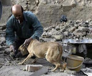 A dog is seen in Baghdad in this file photo.