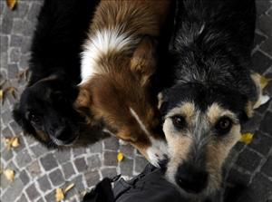 Kyrgyzstan says it can't afford to build shelters for its strays.