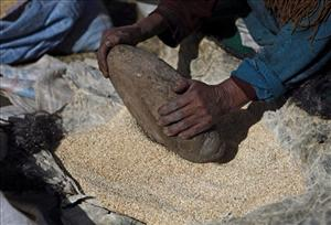 In this photo taken Oct. 25, 2010, an Aymara woman grinds quinoa grain in Pacoma, Bolivia. Quinoa's rising popularity among First World foodies has been a boon to some of the poor farmers in the semiarid highlands of Bolivia.
