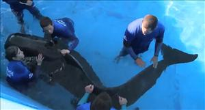 A frame grab from YouTube video of SeaWorld.