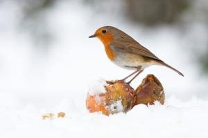 The mayor of a California town says birdsong is cutting crime.