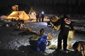 Scott Janssen puts down straw for his team in Nikolai, Alaska, during the Iditarod Sled Dog Race.