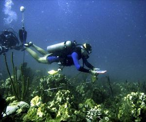 A fisheries biologist examines a coral reef in in St. Croix, Virgin Islands, after bleaching from record hot water followed by disease killed ancient and delicate coral there, in this 2005 file photo.