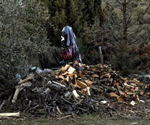 Cut trees are pictured in central Greece on January 9, 2012. Illegal logging has taken on epidemic proportions, according to reports from forestry services.