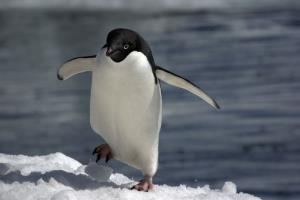 Certain 'hooligan' penguins behaved badly 100 years ago, according to a newly unearthed report.