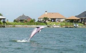 The dolphin jumps in the water in Sunset Canal in Slidell, Louisiana.