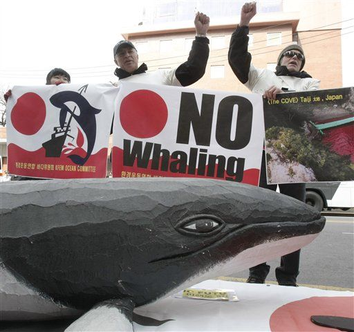 the resumption of whaling in norway and american attitude towards the issue Marine mammal policy debate and a return to large-scale commercial whaling norway in favour of a resumption of commercial whaling.