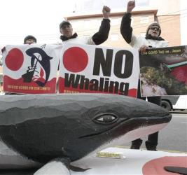 Environmentalists stage an anti-whaling rally against Japan's whaling in front of the Japanese Embassy in Seoul, South Korea.