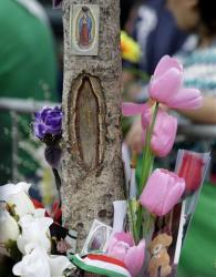 The faithful believe they see the image of Our Lady of Guadalupe in this tree in West New York, NJ.