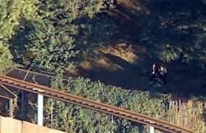 The scene where a man was mauled by a tiger at the Bronx Zoo in New York.