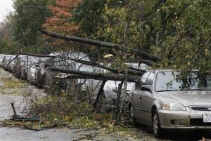 Trees lie fallen across parked cars in Brooklyn.