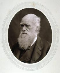 This photo from 1878 provided by the Granger Collection shows English naturalist Charles Darwin.