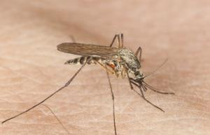 Some worry the West Nile virus could be mutating into something more dangerous.