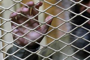 In this March 23, 2011 photograph, an Afghan detainee is seen through iron mesh inside the Parwan detention facility near Bagram Air Field in Afghanistan.