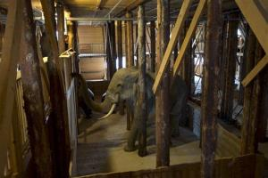 An interior view of the ark, complete with life-sized replica elephant.