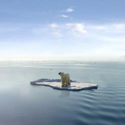 A polar bear atop a chunk of ice.