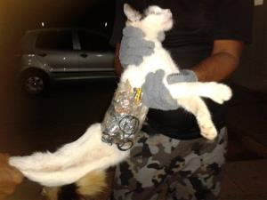 In this photo taken Monday, Dec. 31, 2012, guards hold a cat that has items taped to its body at a medium-security prison in Arapiraca, in Alagoas state, Brazil.