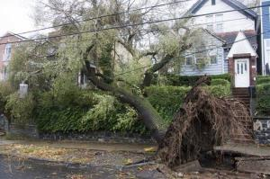 In this Oct. 31, 2012 photo, a tree in Jersey City, NJ, lies tangled in power lines after being brought down by high winds from Superstorm Sandy.