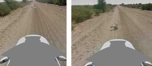 Google defended itself today from accusations that a Google Street View car had run over a donkey in Botswana.
