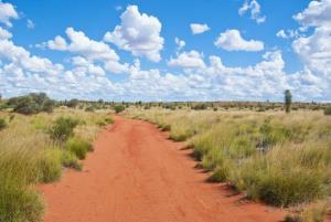 Australian bushland.