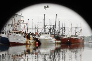 Commercial fishing boats sit idle in Portland Harbor in Portland, Maine on June 25, 2009. Fishery officials have voted to greatly limit cod catches in New England for the next three years.