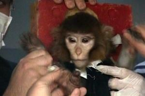 In this undated image taken from AP Television, scientists in Iran surround the space monkey (supposedly).