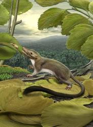 This 2012 artist's rendering provided by the American Museum of Natural History shows a hypothetical placental mammal ancestor, a small, insect-eating animal.