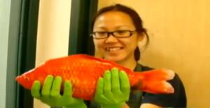 The new owner of a massive goldfish.