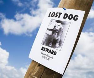 A lot of dogs have gone missing lately.