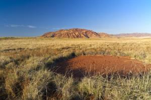 A so-called fairy circle in the Namibian desert.