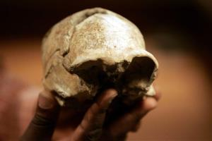 An H. erectus complete skull discovered in 2000 near lake Turkana in Kenya.