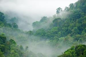 File photo of a rainforest, this one in Thailand.