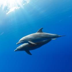 File image of wild dolphins.