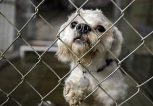 One of three dogs taken from the home of Ariel Castro peers out from its cage at the city kennel in Cleveland.