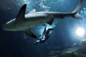 The four times Apnea world record holder, Pierre Frolla, dives near a shark at the Aquarium of Paris.