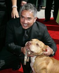 In this Aug. 19, 2006, file photo television personality and dog psychologist Cesar Milan arrives for the Creative Arts Emmy Awards in Los Angeles.