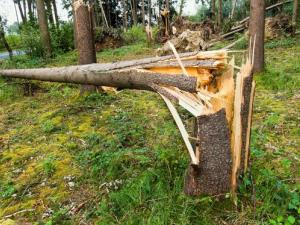 Stock image of a fallen tree.