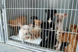 The San Bernardino County Animal Shelter in San Bernardino, California.