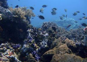 Coral reefs are seen in the waters of Tatawa Besar, Komodo islands, Indonesia.