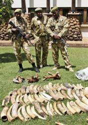 Kenyan Wildlife wardens keep a watch on confiscated elephant tusks at the Kenyan wildlife offices in Nairobi in this file photo.