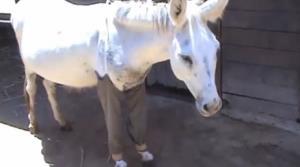 Haim the donkey.
